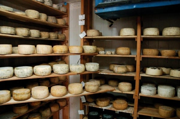 Cheese made in Sde Bar